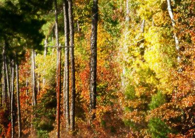 fall_drive_564398