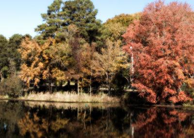 fall_leaves_44293902
