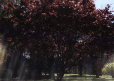 tree_love_34592
