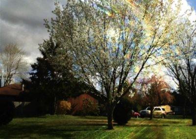 white_tree_382938